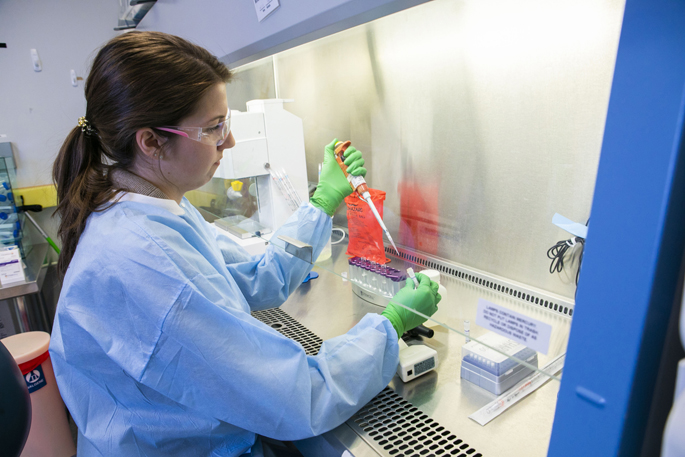 "Lab manager Rachel Nargi prepares a B-cell culture during the recent ""sprint"" to develop an antibody-based treatment for Zika virus infection."
