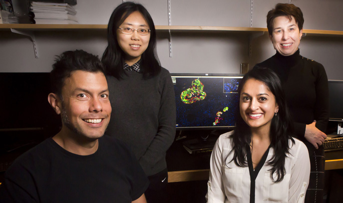 Raymond Blind, PhD, left, Xin Tong, PhD, Rachana Haliyur, PhD, and Marcela Brissova, PhD, are part of a research team that discovered new information about the cellular dysfunction that occurs with a rare form of diabetes.