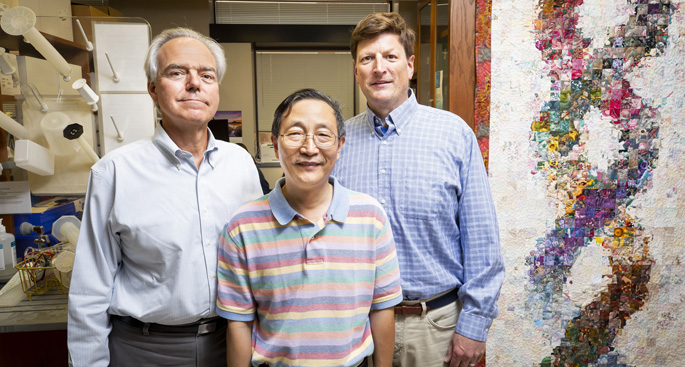 From left, MacRae Linton, MD, Huan Tao, MD, PhD, Jonathan Brown, MD, and colleagues have discovered a potential new target for preventing atherosclerosis.