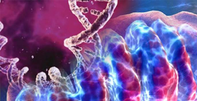 mitochondria dna image