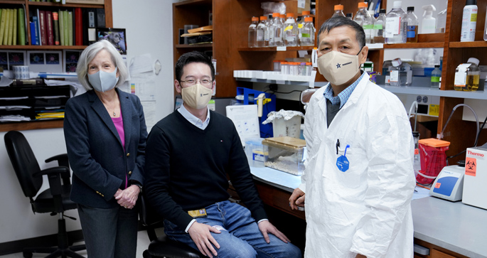 Ann Richmond, MD, Chi Yan, PhD, Jinming Yang, PhD, and colleagues are studying ways to boost antitumor immunity and reduce tumor growth in breast cancer and melanoma.
