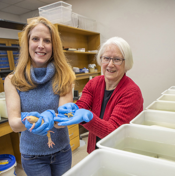 Louise Rollins-Smith, PhD, right, Laura Reinert, MS, and colleagues are studying how amphibian populations are impacted by climate change.