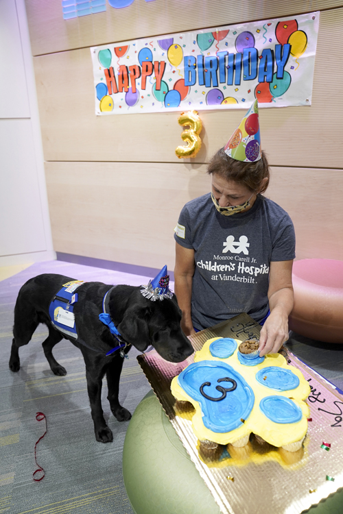 Monroe Carell Jr. Children's Hospital at Vanderbilt recently held a birthday party for its new facility dog, Squid. The party in Seacrest Studio was livestreamed to patients and featured Squid performing a few tricks and, of course, birthday cake, which he received from his handler, Leslie Grissim.