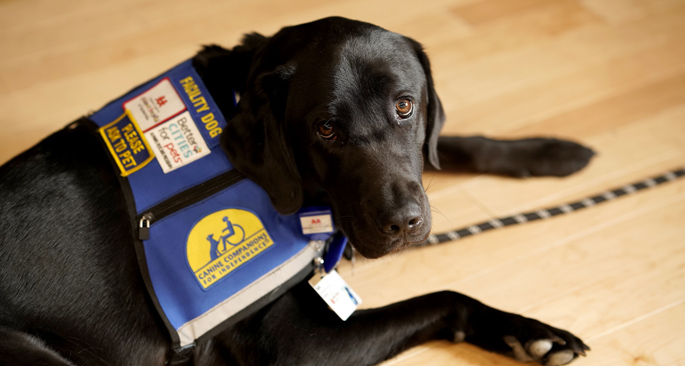 Squid the facility dog comes the Children's Hospital following an extensive two-year training regime.